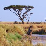 Découvrir la Tanzanie.