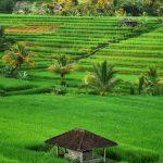 Destinations de vacances en campagne asiatique